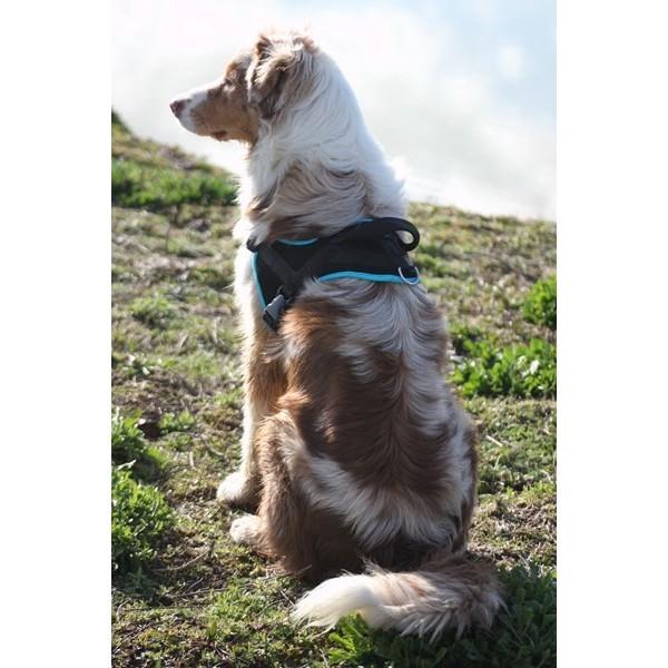 Multi Harnais ANIMALIN® en vente chez Ann-Sophie Muffat / www.comportementaliste-chien-chat.be