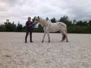 Journée d'initiation au clicker training cheval - Anne-Sophie Muffat et Pongo