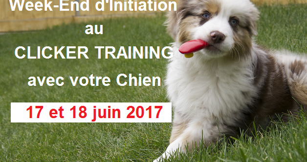 Stage d'initiation au clicker training le 17 et 18 juins 2017.